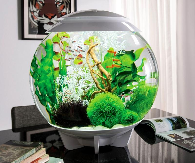 юноннаюля фото оригинальных аквариумов основном связана передвижением